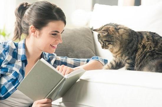 cara membersihkan bulu kucing bertebaran di dalam rumah