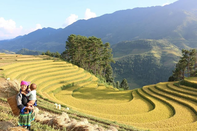 Mu Cang Chai - A special highlight of the mountainous region of North Vietnam 2