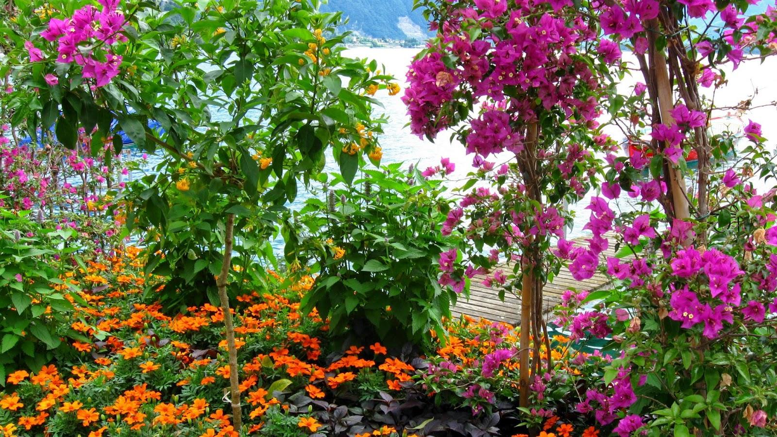 Flower Garden Wallpaper Free Download|http://refreshrose ...