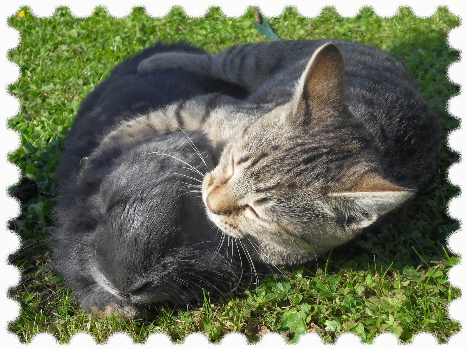 le coin des animaux mes chats la bergerie. Black Bedroom Furniture Sets. Home Design Ideas