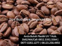 Tips Budidaya Tanaman Kopi