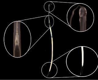 Espermatóforos © CALOCEAN