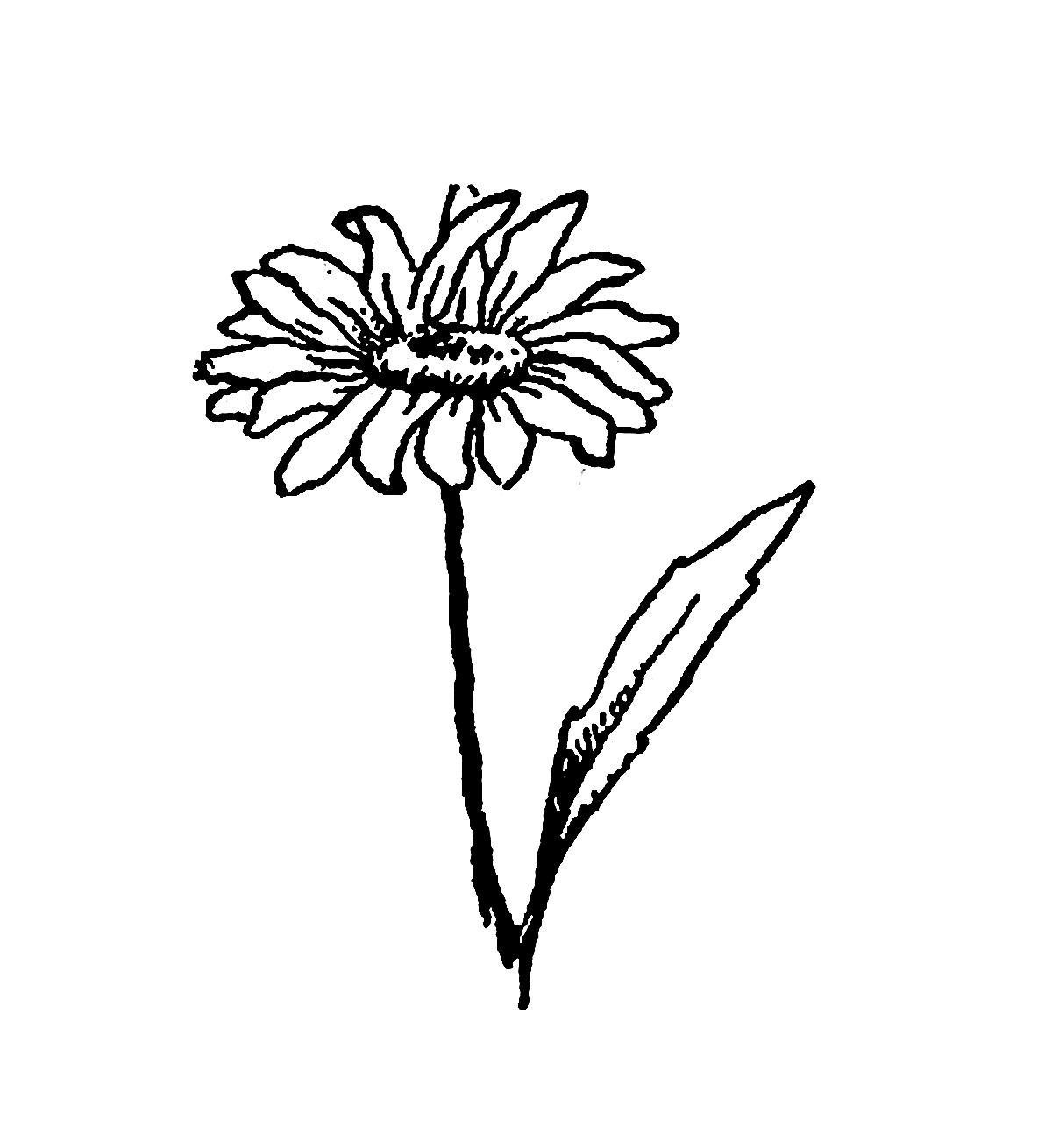 Digital Stamp Design Digital Wildflower Download Daisy