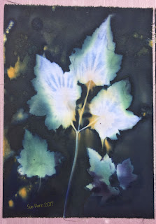 Wet cyanotype, Sue Reno, Image 4