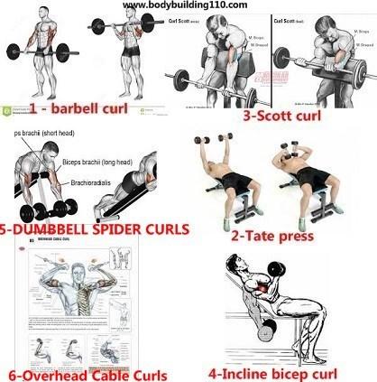 6 Elbow Positions For Big Biceps Www Bodybuilding110 Com