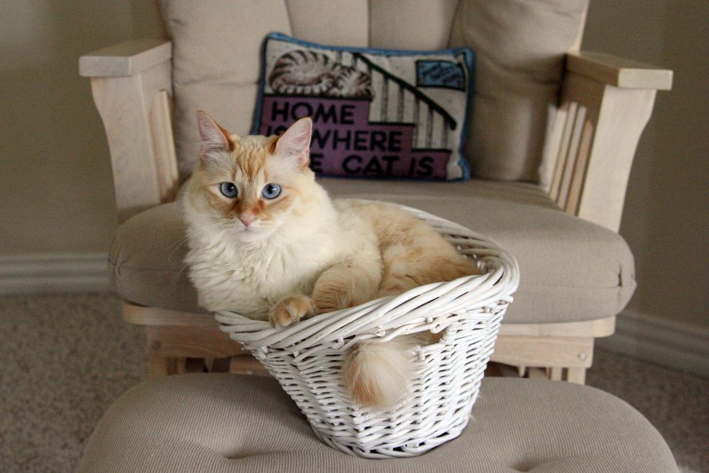 3. Milk Kitty in a basket by greatandlittle