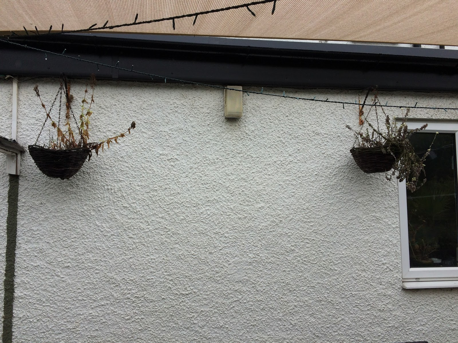 garden clean up - hanging baskets with dead plants
