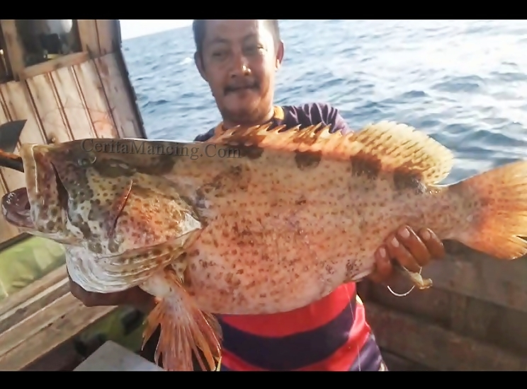 Handline Fishing Hookup Big Grouper Fish