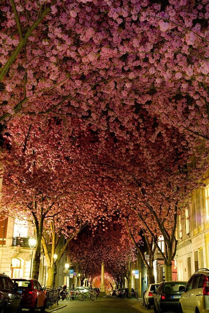 Street in Bonn