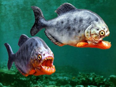 Funny Pictures Gallery: Most dangerous fish in the world ...