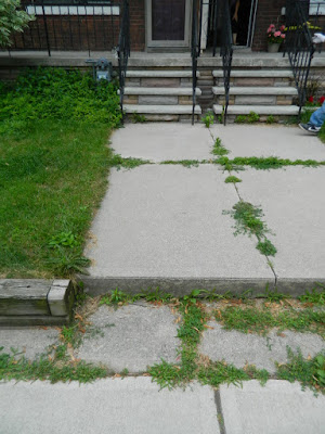 Beach Hill front yard cleanup before by Paul Jung Gardening Services Toronto