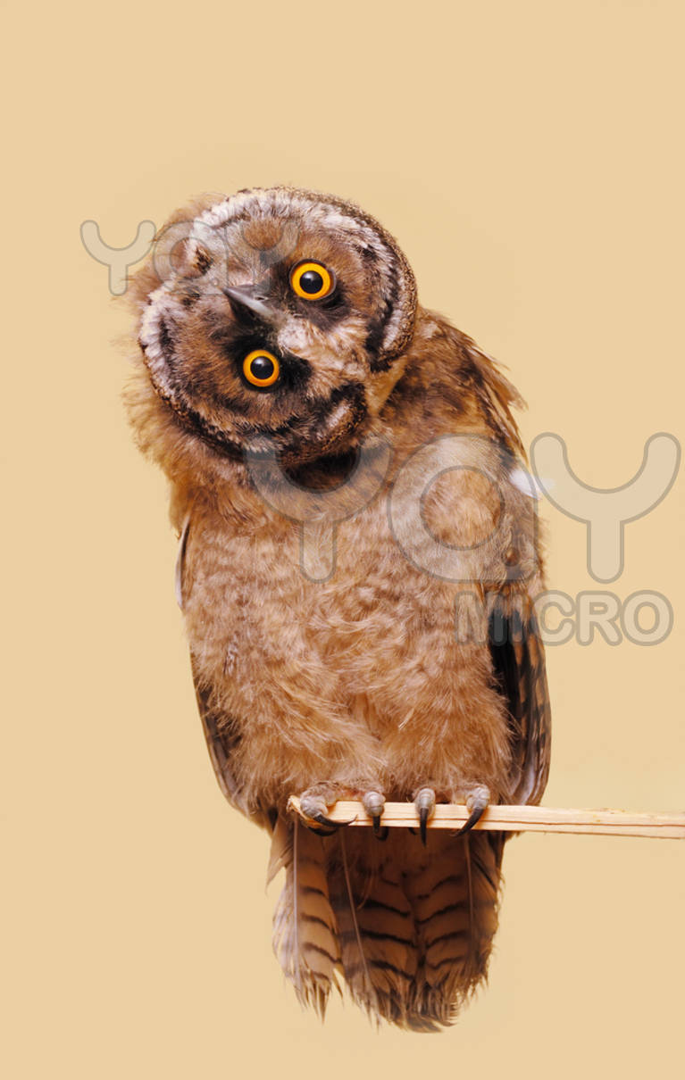 Cute Puppies Images Wallpapers Funny Owl Images Funny Animal