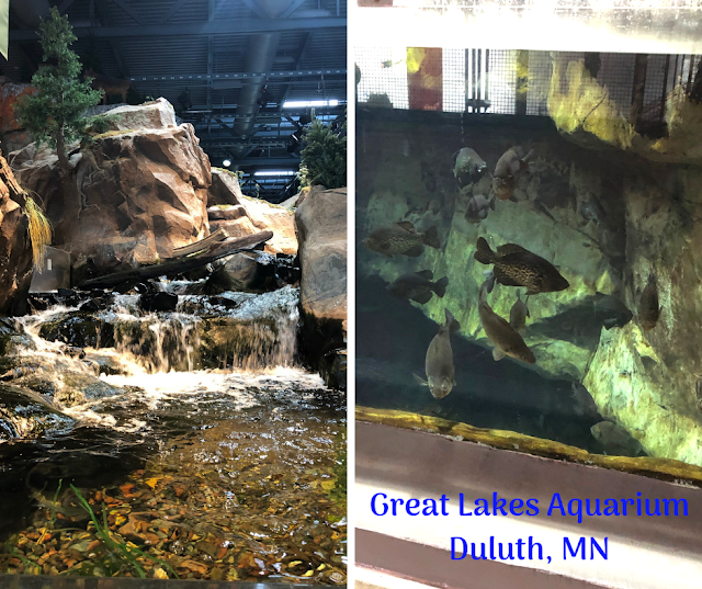 Exploring the Wildlife Wonders and Ecology of Lake Superior at the Great Lakes Aquarium