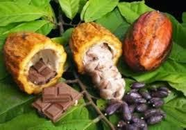 Hasil gambar untuk Buah Coklat