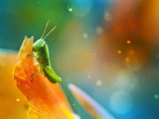 10 impresionantes macro fotografias de insectos.