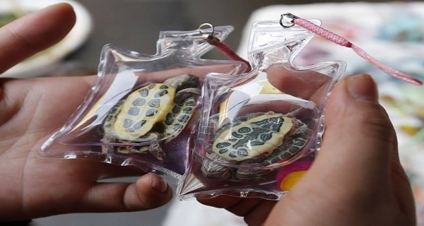 Live Animals Are Being Stuck Inside Tiny Plastic Keychains
