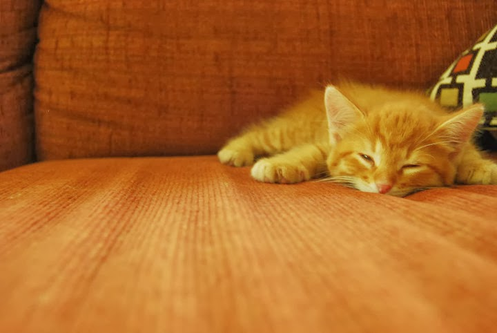 Funny cats - part 87 (40 pics + 10 gifs), kitten resting on couch