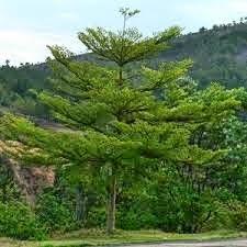 http://danahauses.blogspot.com/2017/04/contoh-pohonpohon-pelindung-untuk-rumah.html