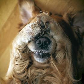 Scared-dog-closing-eyes