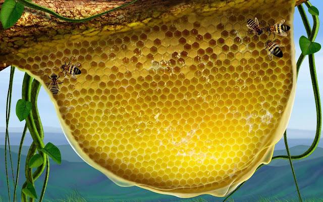 Πωλείται μέλι πεύκου στην Ρόδο