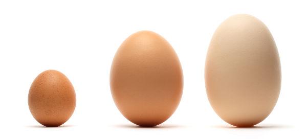 Uova di differenti dimensioni