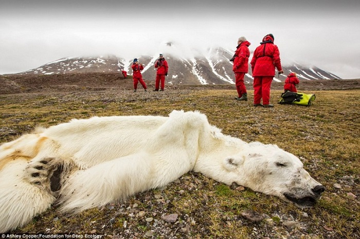 20 Pictures That Prove That Humanity Is In Danger - This polar bear starved to death in Svalvard, Norway