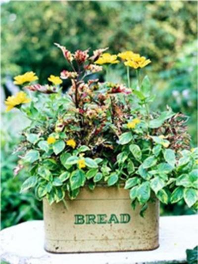 Kaleng roti jadi pot tanaman.
