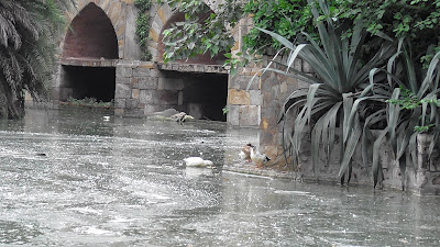 Delhi Jor Bagh Garden Birds 883