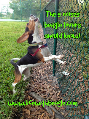 The 5 noises beagle lovers should know