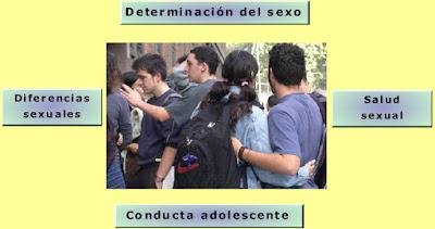 http://recursostic.educacion.es/secundaria/edad/3esobiologia/3quincena10/imagenes/adolesc_sexuali.swf