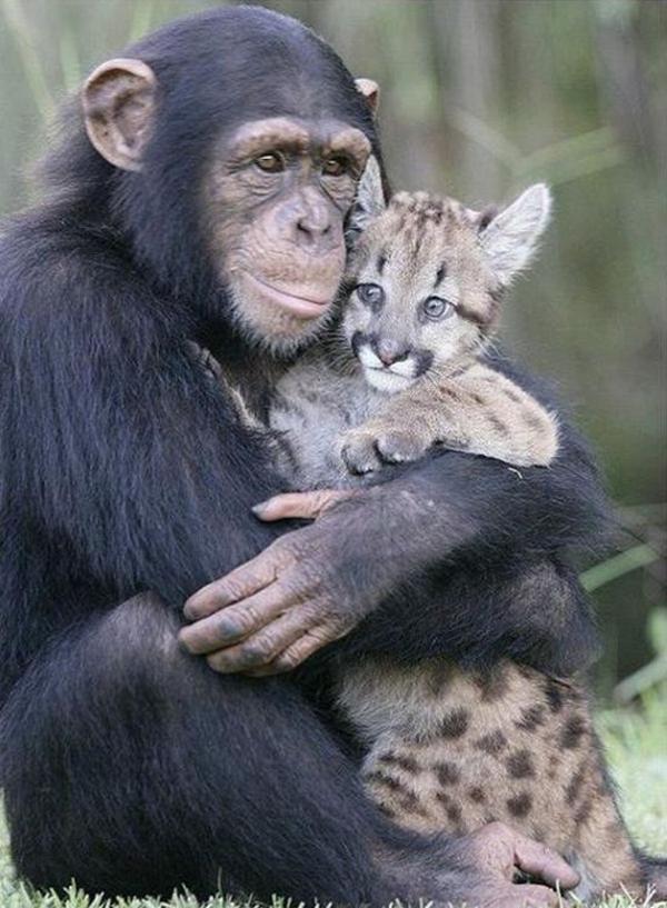 love animals monkey in - photo #8