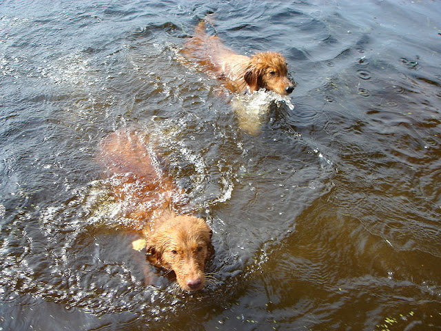 Male and female toller names
