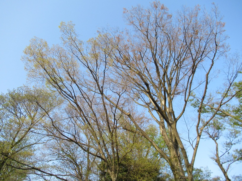 spring green three trees - photo #28