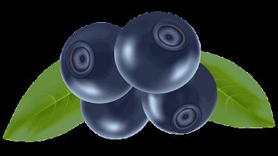 clipart gambar buah blueberry