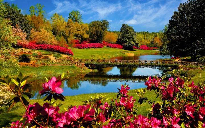köprü önünde çiçekli manzara resimleri