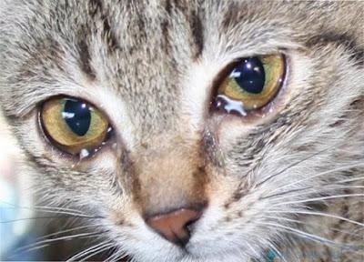 Как сильно коты могут обижаться