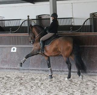 Riitta Reissaa, Portugal, passage, HorseXplore