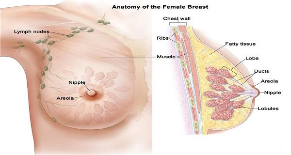 Only Two Servings a Week Of This Food Will Protect You From Breast Cancer