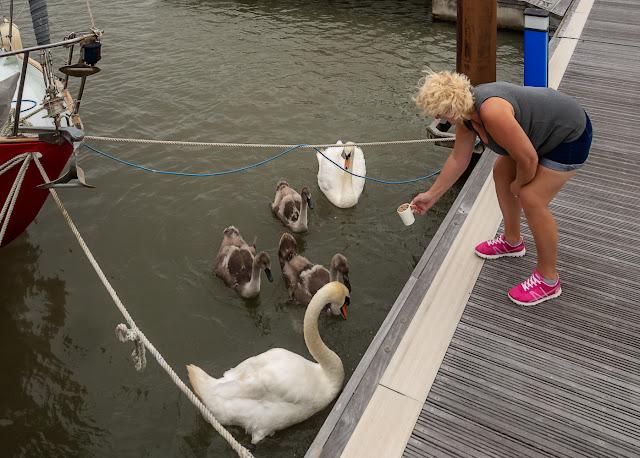 Photo of me feeding the swan family