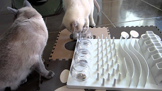 permainan asah otak kucing