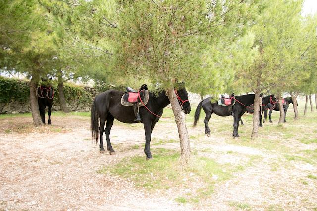 Tour in bici e cavallo-Abbazia di Pulsano-Photo tour Puglia-Manfredonia