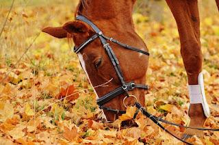 落ち葉に顔を突っ込む馬