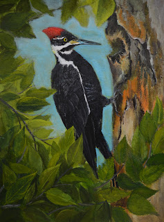 Painting Pileated Woodpecker Session 5