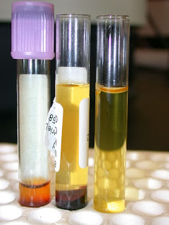 exame de sangue em cães