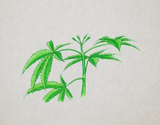 poda FIM cannabis