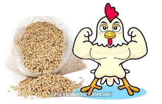 ransum yang baik akan menurunkan kemungkinan ayam kerdil atau kecil