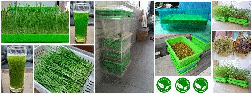 家庭水耕栽培盒