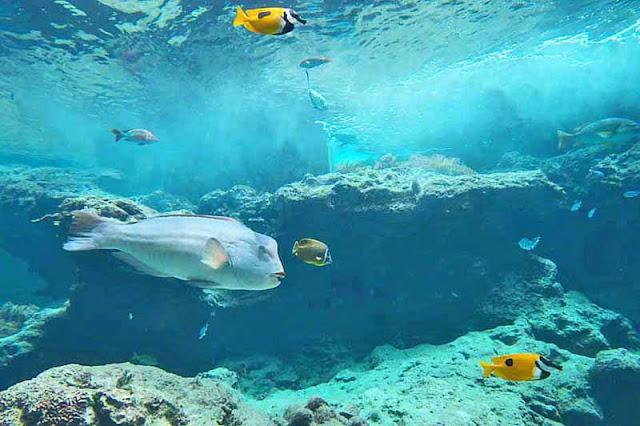 aquarium, Churaumi, fish, Motobu, Okinawa, travel