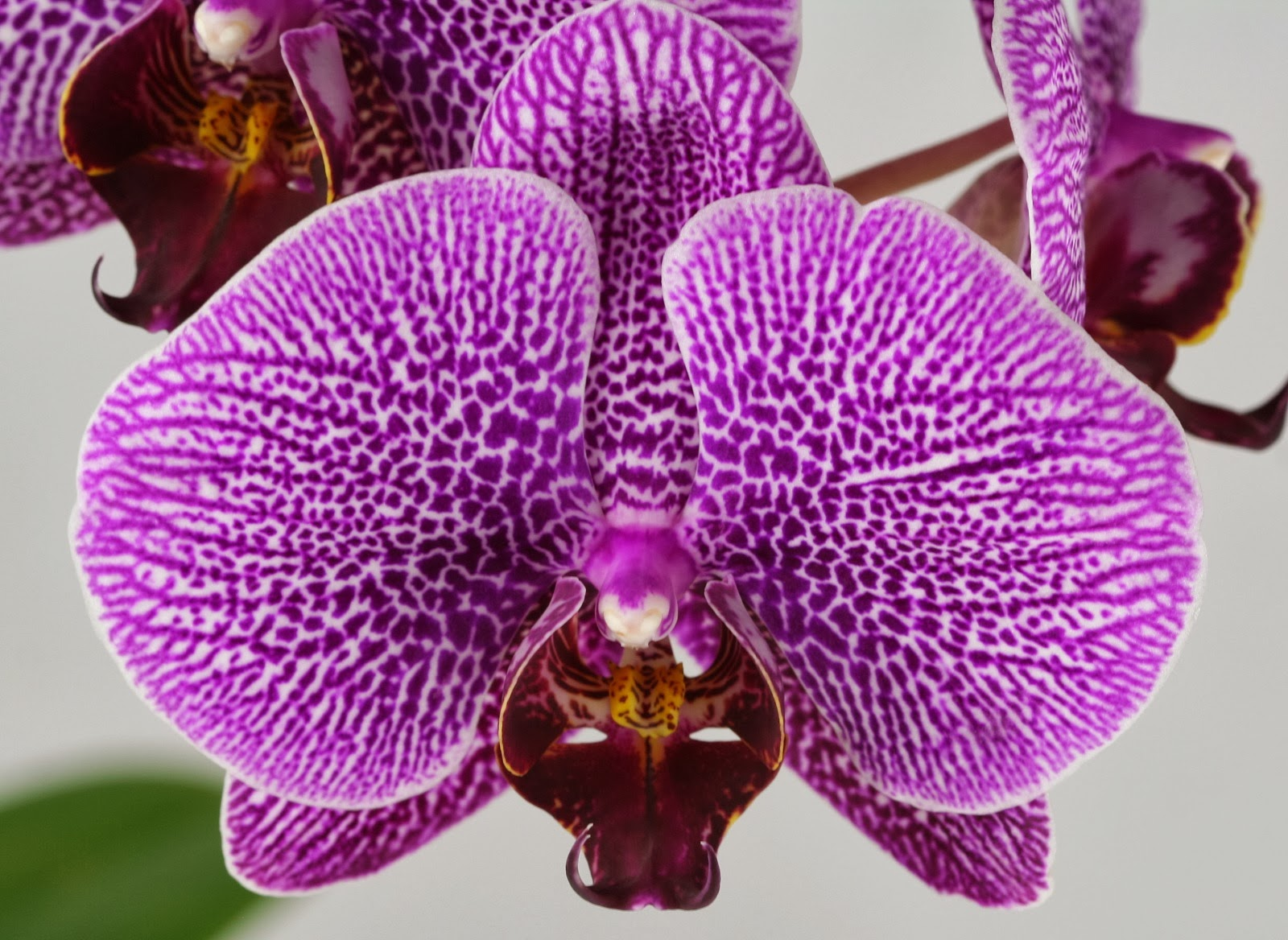 Blok888 Top 10 Most Exotic Flowers In The World 1