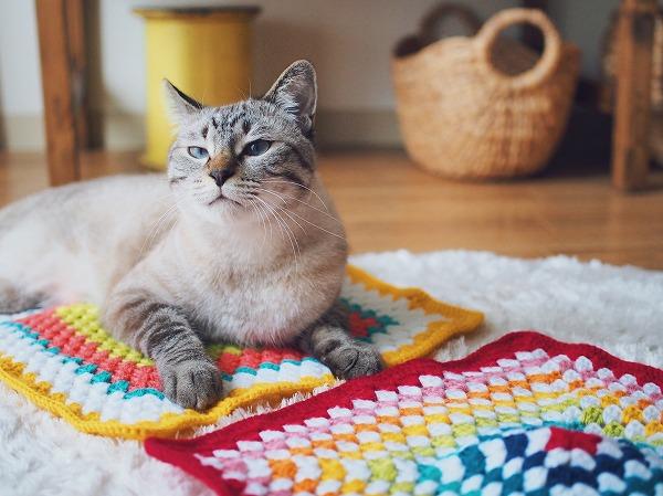 グラニースクエアモチーフの上に乗ってるシャムトラ猫